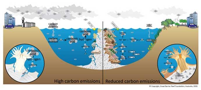 efectos sobre el coral por la acidificación del océano