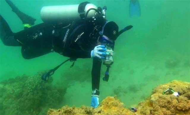 estudiando la enfermedad del coral en Hawai