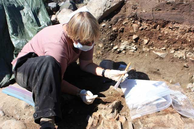 Jette Arneborg descubre antiguos huesos de colonos nórdicos