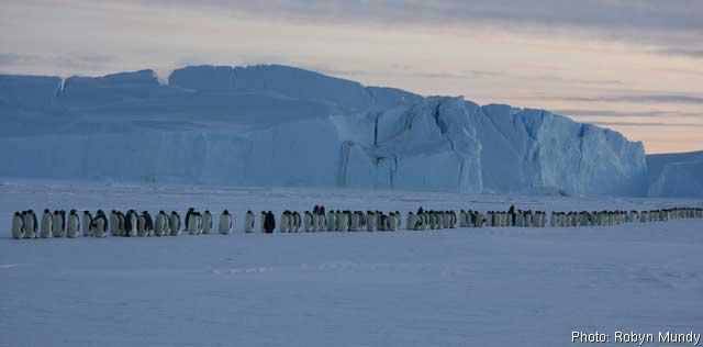 La marcha del pingüino emperador
