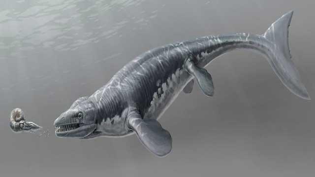 mosasaurio Platecarpus