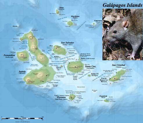 operación matarratas en las islas Galápagos