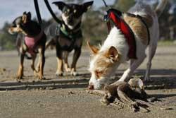 perro huele a un calamar en California