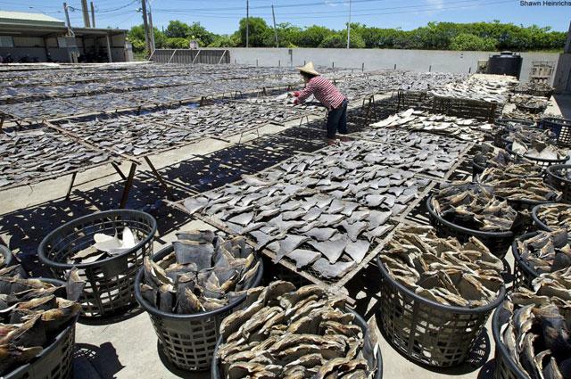 aletas de tiburón secándose en Hong kong