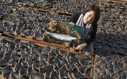 aletas de tiburón en un tejado de Hong Kong