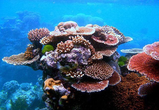 arrecife de coral, Toliara - Madagascar