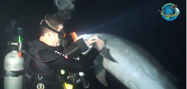 buzo desenreda hilo de pesca a un delfín