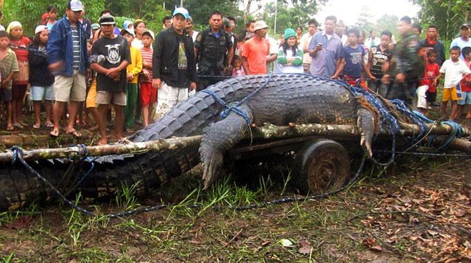 captura del cocodrilo Lolong - Filipinas