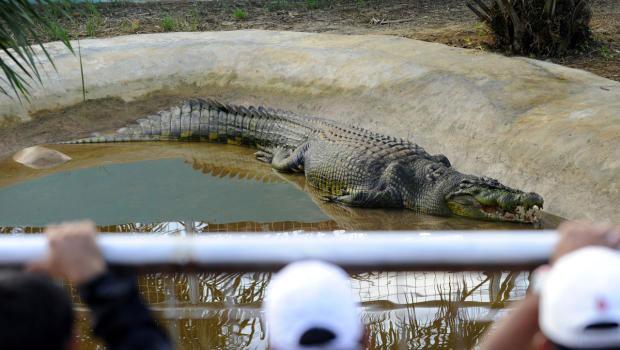 cocodrilo Lolong en Bunawan, Filipinas