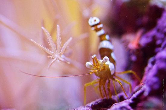 coral en un acuario de agua salada - macro fotografía