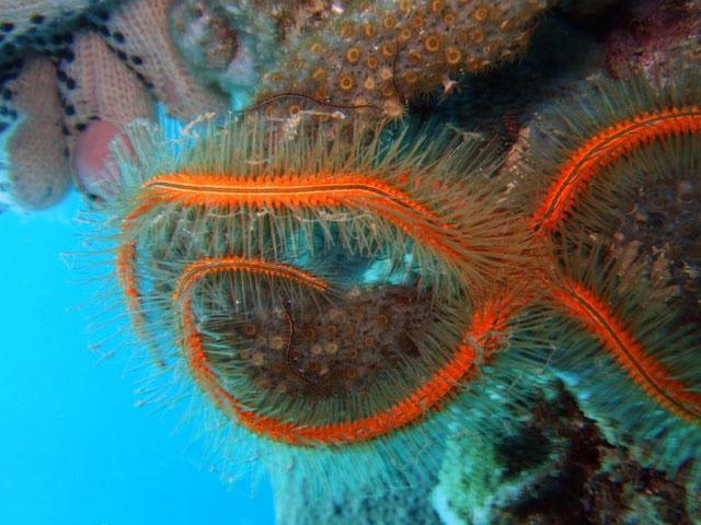 estrella de mar y esponjas