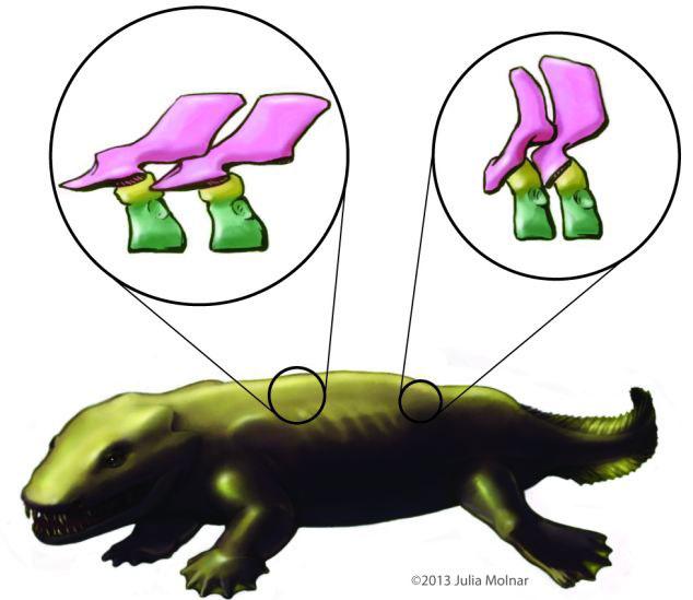 estructura de la columna vertebral del Ichthyostega