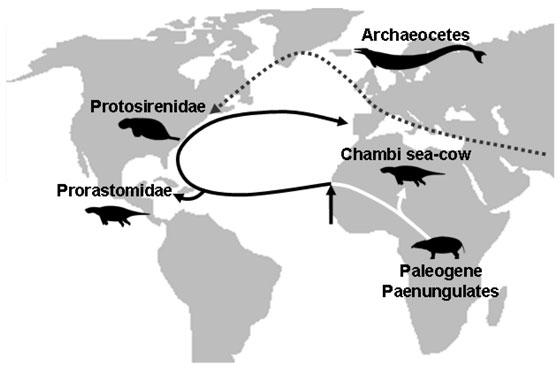 hipotética dispersión del género sirenian
