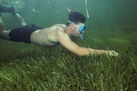 investigación sobre praderas marinas