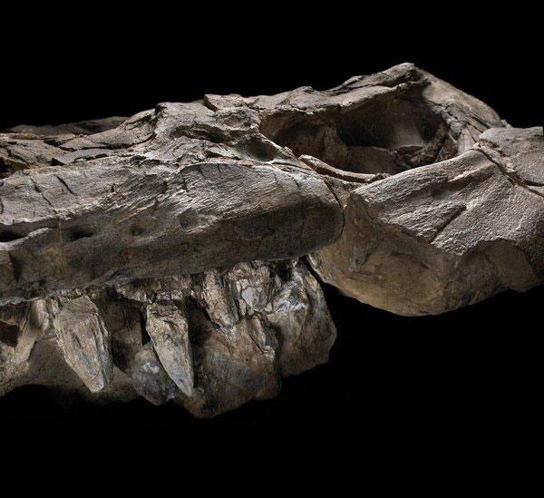 mandíbula del Thalattoarchon saurophagis
