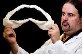 mandíbulas de tiburón