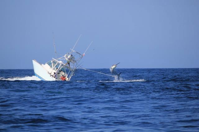 marlin hunde barco en Panamá