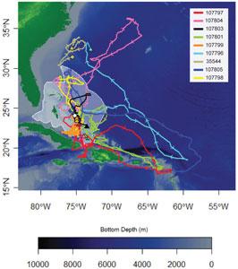 recorridos de tiburones oceánicos en las Bahamas