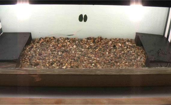 tanque para el estudio de la reacción de los cangrejos a la electricidad