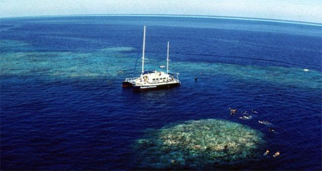 turistas bucean entre arrecifes de coral