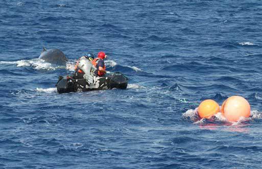 rescate ballena enredada en Hawái