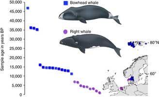 ballena de Groenlandia, seguimiento del ADN