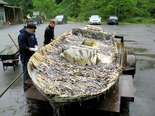 barca de los escombros del tsunami de Japón