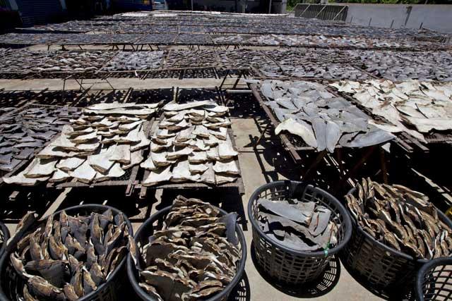 comercio de aletas de tiburón
