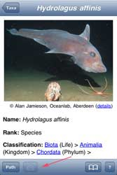 Deep Sea ID