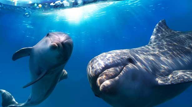 Los delfines se llaman por su nombre