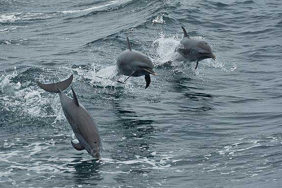 delfines saltando fuera del agua
