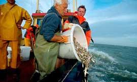 descartes pesqueros