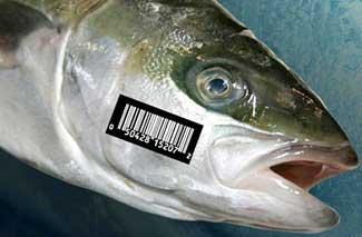 etiquetado del pescado