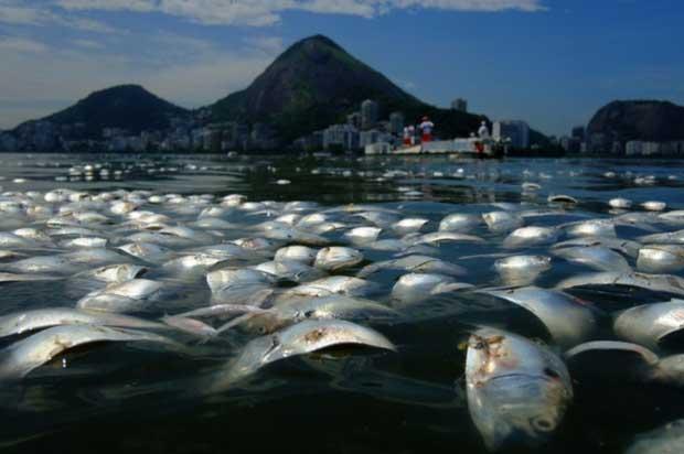 peces muertos en laguna de Río de Janeiro