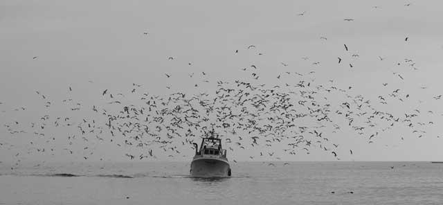 pesquero y gaviotas