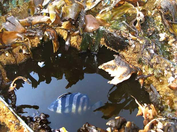pez en la barca de los escombros del tsunami de Japón