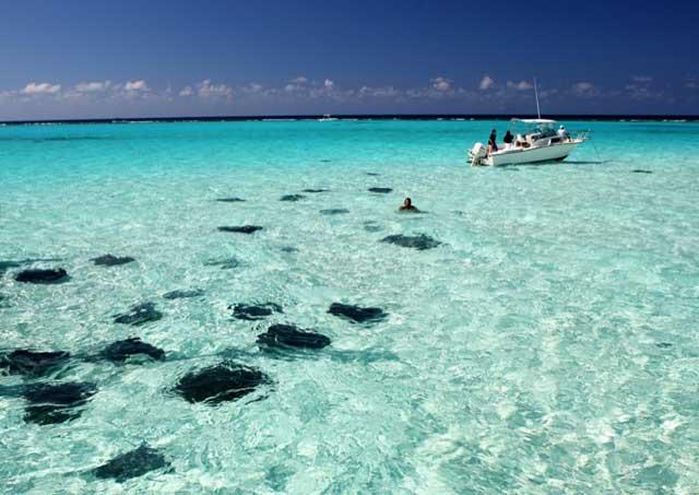 rayas en Stingray  City/Sandbar en las Islas Caimán