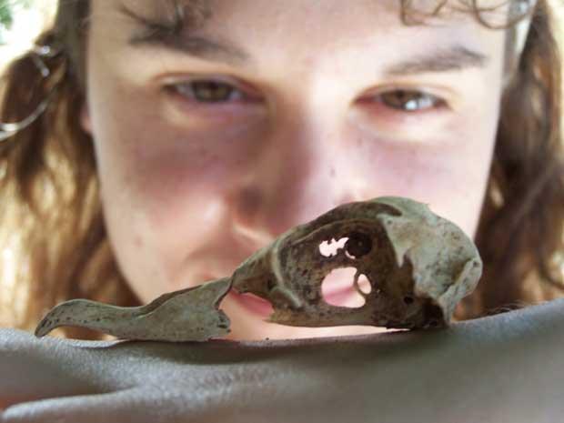 Anne Wiley observa el cráneo de un petrel hawaiano
