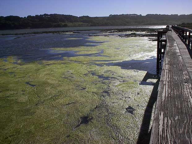 bacterias productoras de superoxidantes en un lago