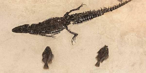caimán (Tsoabichi greenriverensis)