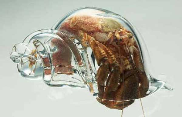 concha de cristal de un cangrejo ermitaño