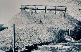 montones de conchas de ostras Chesapeake bay a finales del siglo XIX