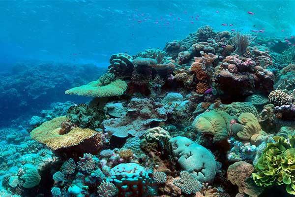 propagación de los corales