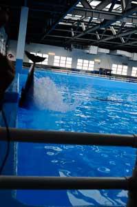 delfín choca intencionadamente contra una pared