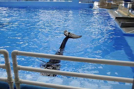 un delfín en Ocean Park de Hong-kong