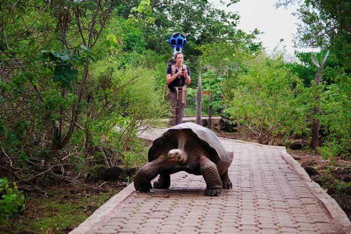 Google Trekke en Galapagos con una tortuga gigante