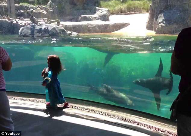león marino y niña