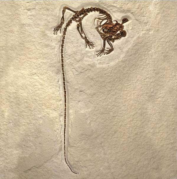 mamífero arbóreo de larga cola