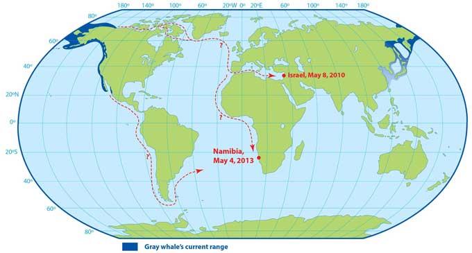 mapa posibles recorridos de las ballena grises