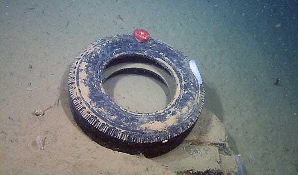 neumático en el fondo marino del Monterey Canyon, California